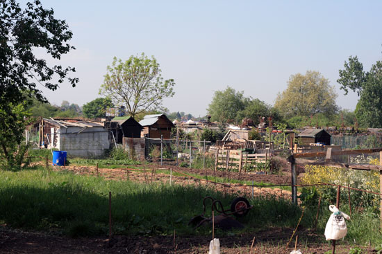 Kingston Road allotments