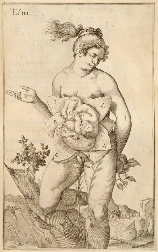 Renaissance anatomical drawing