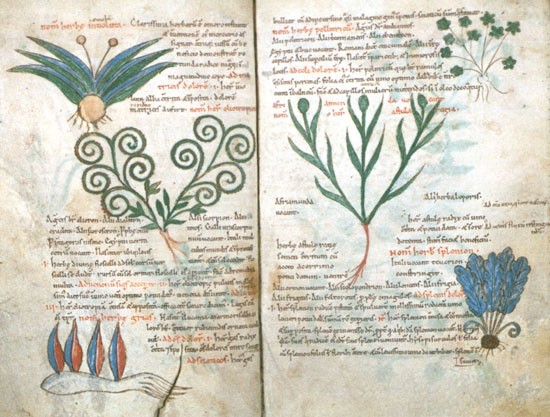 Page from the Pseudo-Apuleius Herbarium
